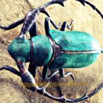 Đúc đồng trang trí với mẫu côn trùng đồng xinh động đẹp mắt